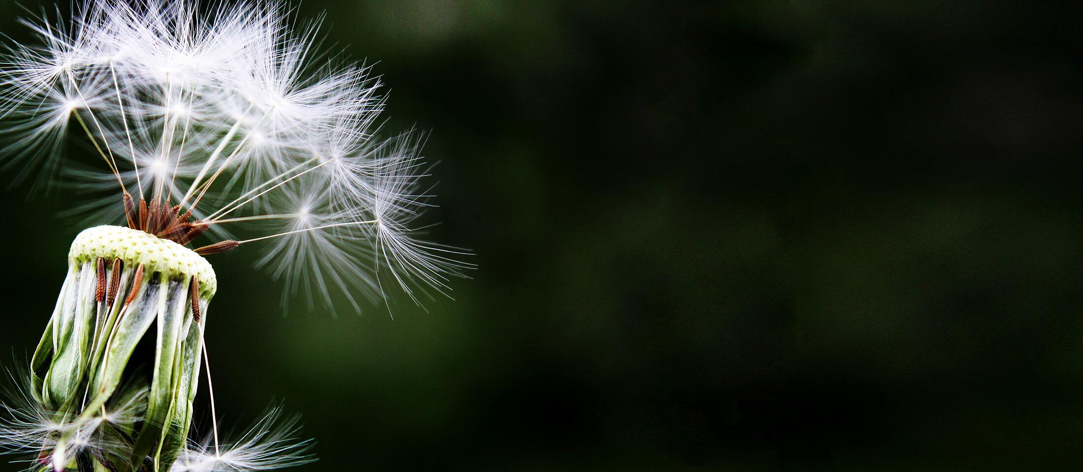 allergies-slider
