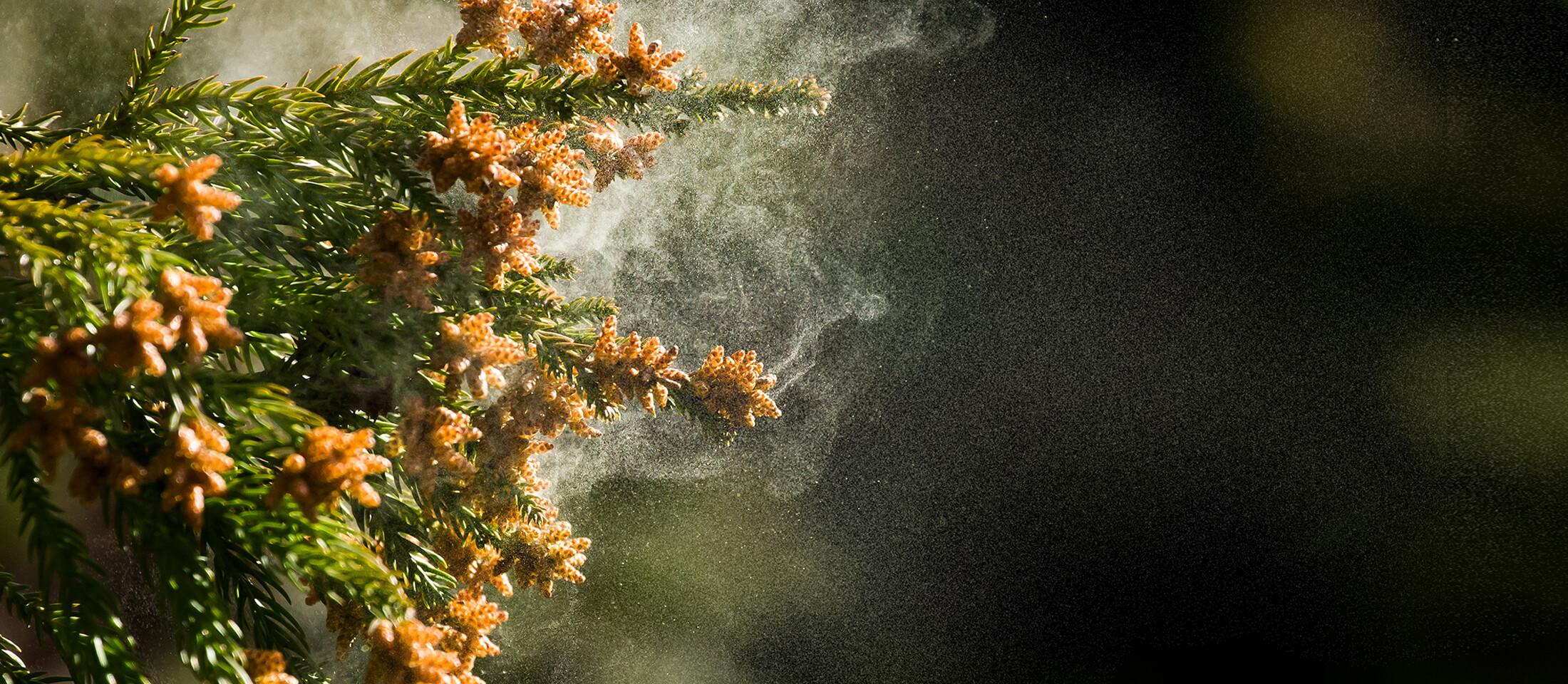 allergikh-rinitida_slider