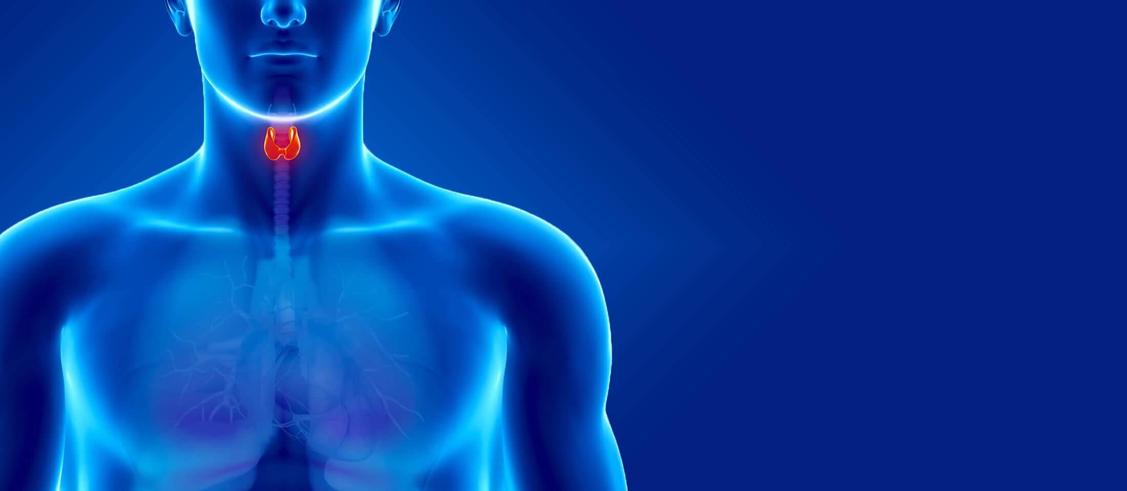 thyroid-livadas_slider-2